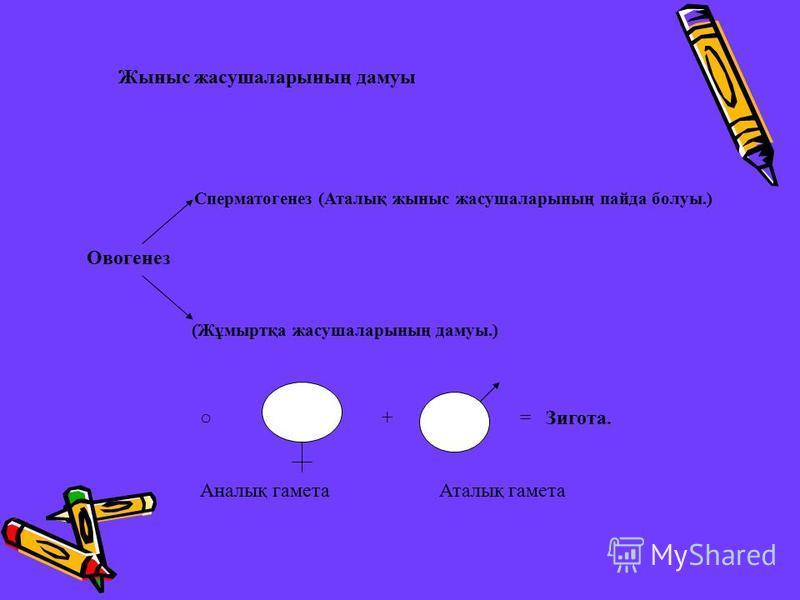 Жыныс жасушаларының дамуы Овогенез (Жұмыртқа жасушаларының дамуы.) Сперматогенез (Аталық жыныс жасушаларының пайда болуы.) + = Зигота. Аналық гамета Аталық гамета