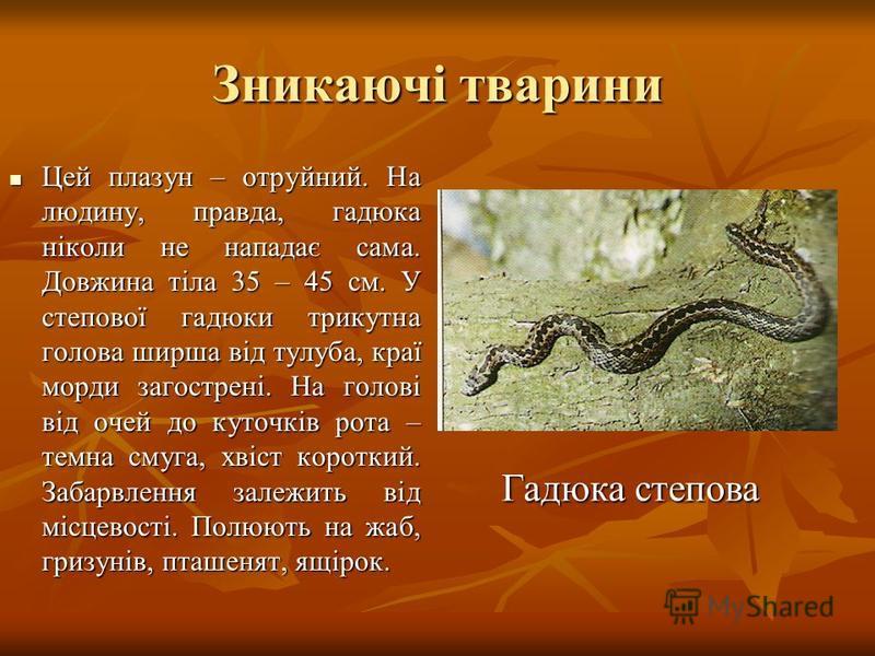 Зникаючі тварини Цей плазун – отруйний. На людину, правда, гадюка ніколи не нападає сама. Довжина тіла 35 – 45 см. У степової гадюки трикутна голова ширша від тулуба, краї морди загострені. На голові від очей до куточків рота – темна смуга, хвіст кор