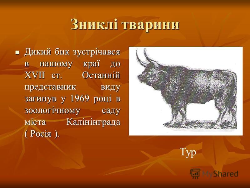 Зниклі тварини Дикий бик зустрічався в нашому краї до ХVІІ ст. Останній представник виду загинув у 1969 році в зоологічному саду міста Калінінграда ( Росія ). Дикий бик зустрічався в нашому краї до ХVІІ ст. Останній представник виду загинув у 1969 ро