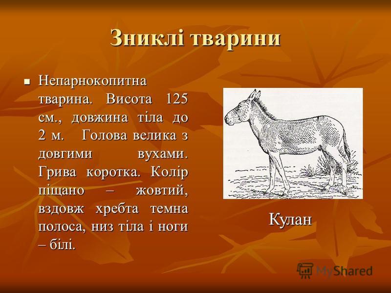 Зниклі тварини Непарнокопитна тварина. Висота 125 см., довжина тіла до 2 м. Голова велика з довгими вухами. Грива коротка. Колір піщано – жовтий, вздовж хребта темна полоса, низ тіла і ноги – білі. Непарнокопитна тварина. Висота 125 см., довжина тіла