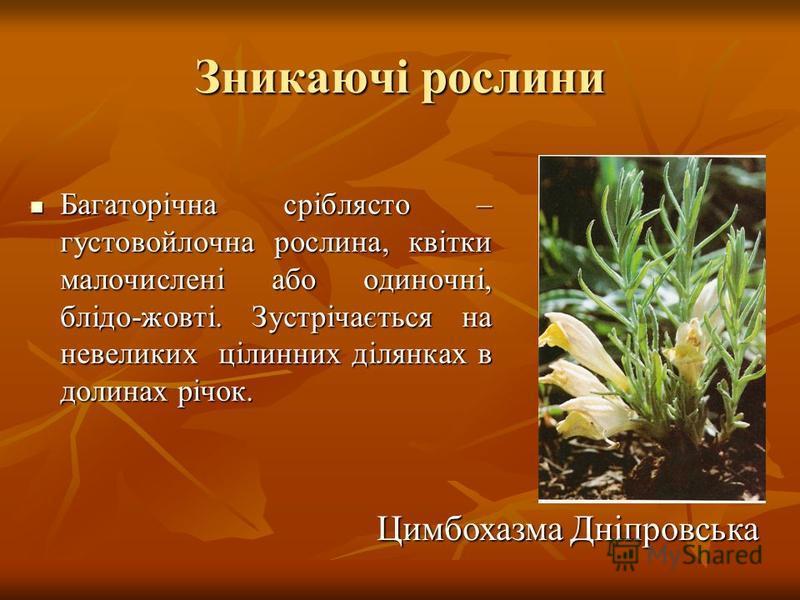 Зникаючі рослини Багаторічна сріблясто – густовойлочна рослина, квітки малочислені або одиночні, блідо-жовті. Зустрічається на невеликих цілинних ділянках в долинах річок. Багаторічна сріблясто – густовойлочна рослина, квітки малочислені або одиночні