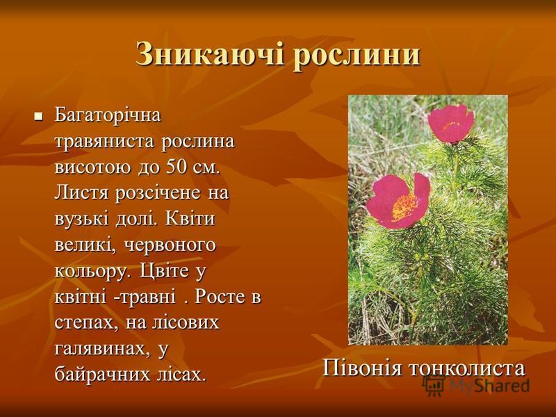 Зникаючі рослини Багаторічна травяниста рослина висотою до 50 см. Листя розсічене на вузькі долі. Квіти великі, червоного кольору. Цвіте у квітні -травні. Росте в степах, на лісових галявинах, у байрачних лісах. Багаторічна травяниста рослина висотою