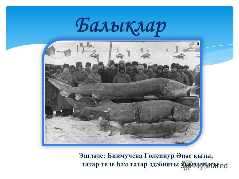 Эшләде: Бикмучева Гөлсинур Әнәс кызы, татар теле һәм татар әдәбияты укытучысы Балыклар