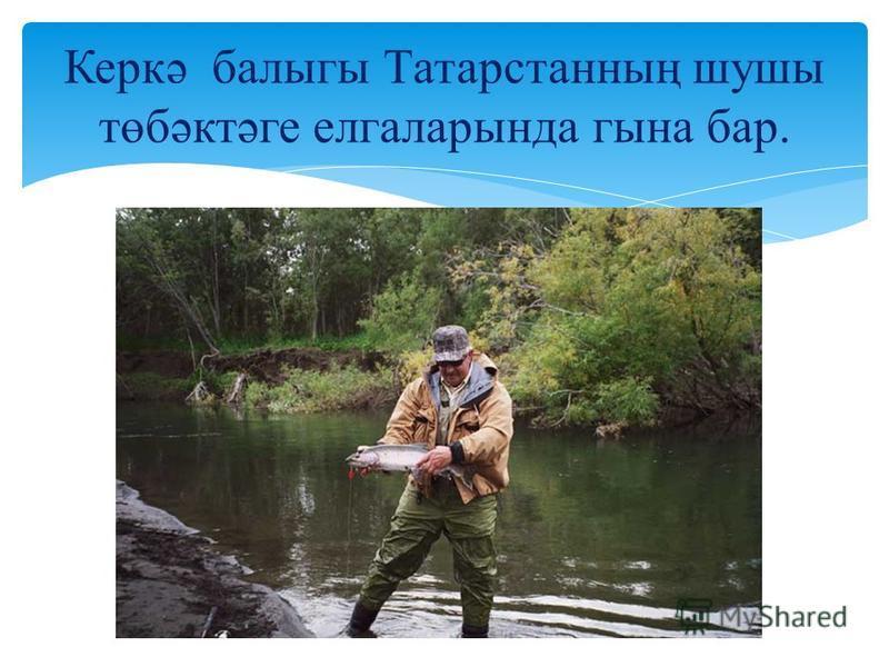 Керкә балыгы Татарстанның шушы төбәктәге елгаларында гына бар.