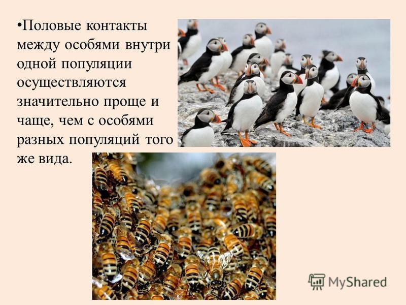 Половые контакты между особями внутри одной популяции осуществляются значительно проще и чаще, чем с особями разных популяций того же вида.