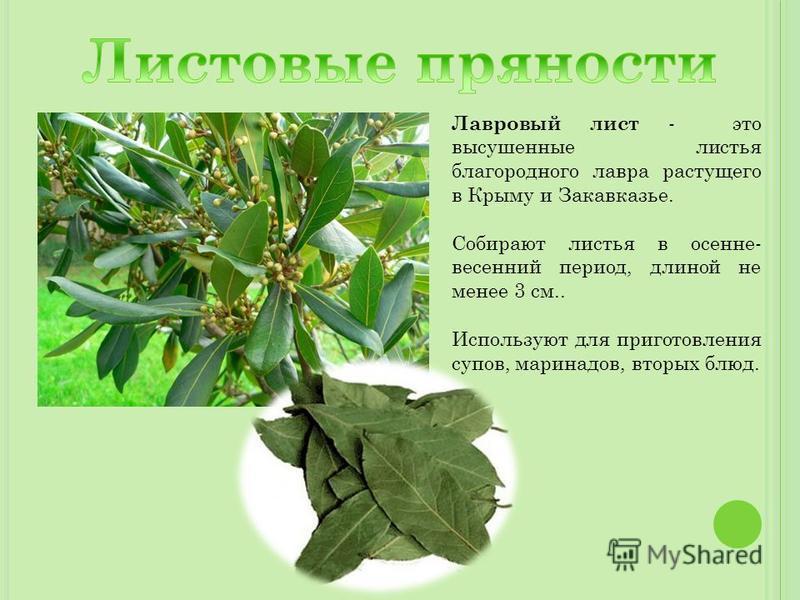 Лавровый лист - это высушенные листья благородного лавра растущего в Крыму и Закавказье. Собирают листья в осенне- весенний период, длиной не менее 3 см.. Используют для приготовления супов, маринадов, вторых блюд.