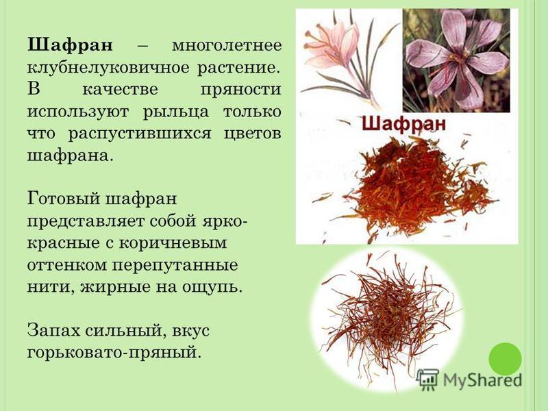 Шафран – многолетнее клубнелуковичное растение. В качестве пряности используют рыльца только что распустившихся цветов шафрана. Готовый шафран представляет собой ярко- красные с коричневым оттенком перепутанные нити, жирные на ощупь. Запах сильный, в