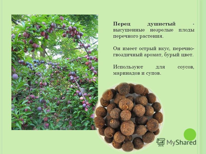 Перец душистый - высушенные незрелые плоды перечного растения. Он имеет острый вкус, перечно- гвоздичный аромат, бурый цвет. Используют для соусов, маринадов и супов.