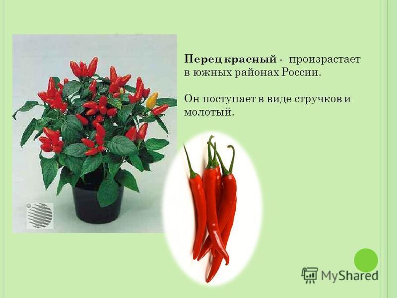 Перец красный - произрастает в южных районах России. Он поступает в виде стручков и молотый.