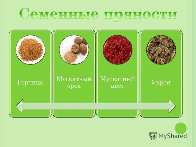 Горчица Мускатный орех Мускатный цвет Укроп