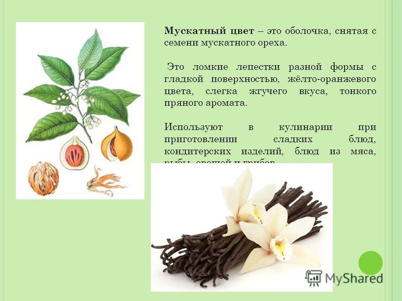 Мускатный цвет – это оболочка, снятая с семени мускатного ореха. Это ломкие лепестки разной формы с гладкой поверхностью, жёлто-оранжевого цвета, слегка жгучего вкуса, тонкого пряного аромата. Используют в кулинарии при приготовлении сладких блюд, ко