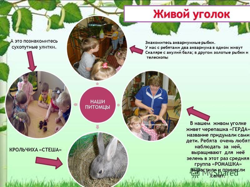 В нашем живом уголке живет черепашка «ГЕРДА» название придумали сами дети. Ребята очень любят наблюдать за ней, выращивают для неё зелень в этот раз средняя группа «РОМАШКА» вырастили и принесли салат. НАШИ ПИТОМЦЫ \ НАША ЛЮБИМИЦА ЧЕРЕПАШКА «ГЕРДА А