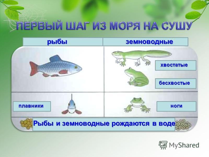 рыбыземнаоводные Рыбы и земнаоводные рождаются в воде хвостатые бесхвостые ноги плавники