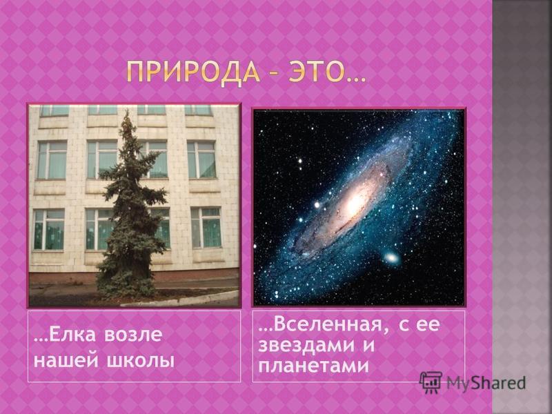 …Елка возле нашей школы …Вселенная, с ее звездами и планетами