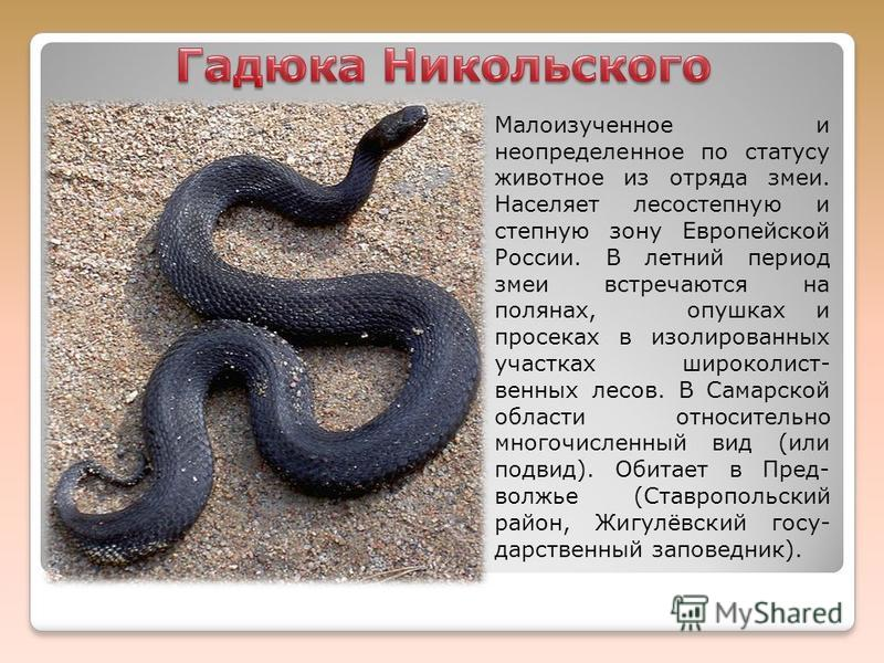 Малоизученное и неопределенное по статусу животное из отряда змеи. Населяет лесостепную и степную зону Европейской России. В летний период змеи встречаются на полянах, опушках и просеках в изолированных участках широколист- венных лесов. В Самарской