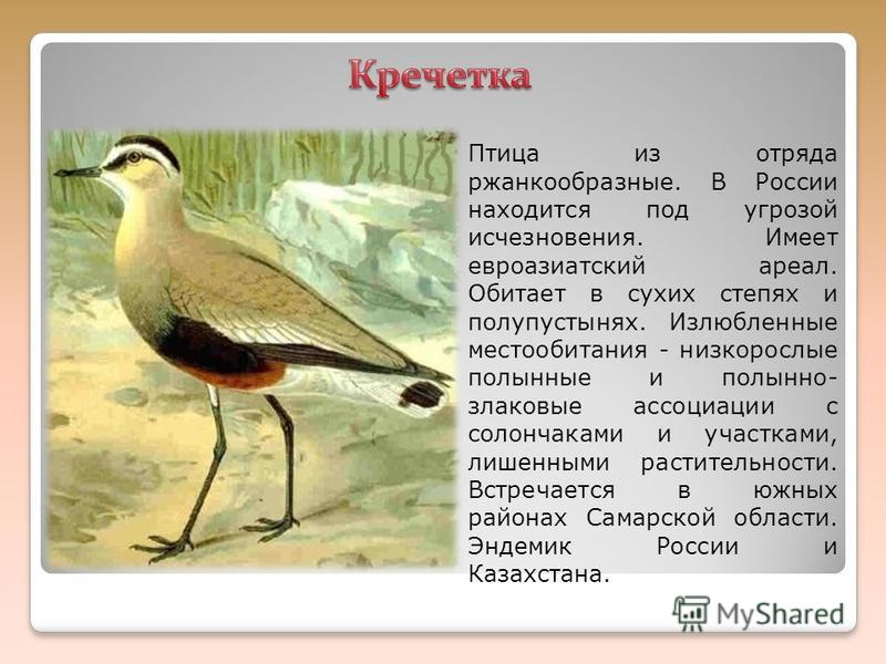 Птица из отряда ржанкообразные. В России находится под угрозой исчезновения. Имеет евроазиатский ареал. Обитает в сухих степях и полупустынях. Излюбленные местообитания - низкорослые полынные и полынно- злаковые ассоциации с солончаками и участками,