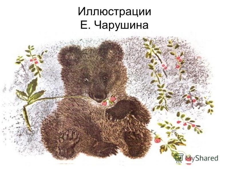 Иллюстрации Е. Чарушина