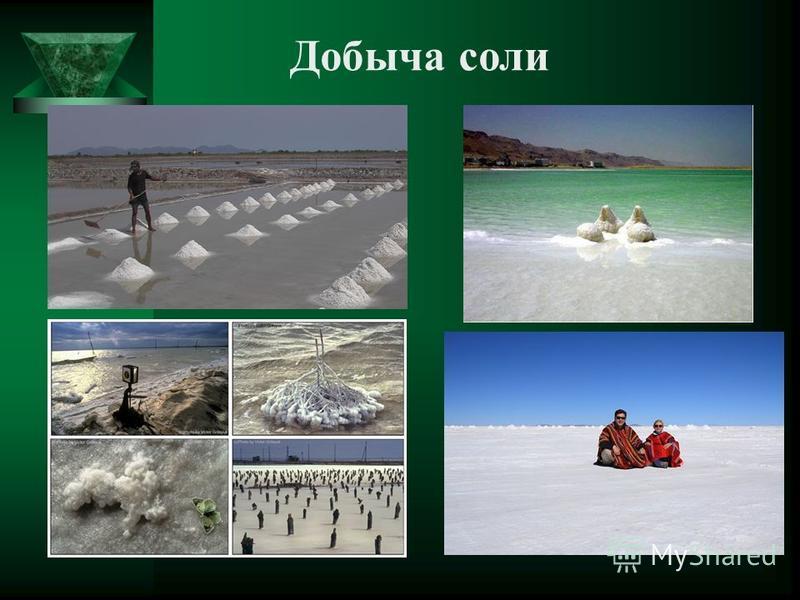 Галофиты Существуют озера, в которых осаждается поваренная соль красного цвета с ароматным запахом. Виновниками окраски и запаха являются галофиты, микроорганизмы, которые не могут жить без соли.