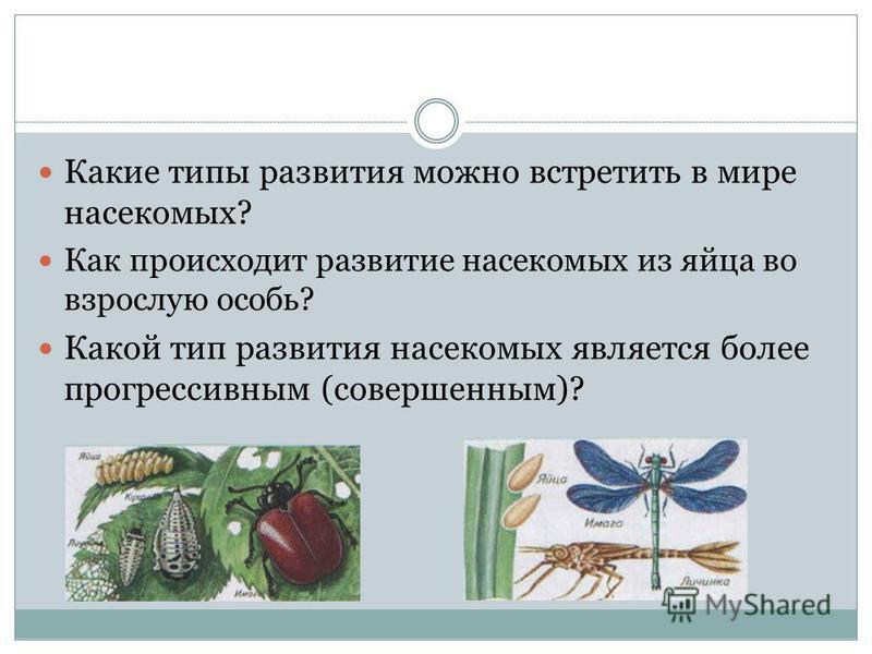 Какие типы развития можно встретить в мире насекомых? Как происходит развитие насекомых из яйца во взрослую особь? Какой тип развития насекомых является более прогрессивным (совершенным)?