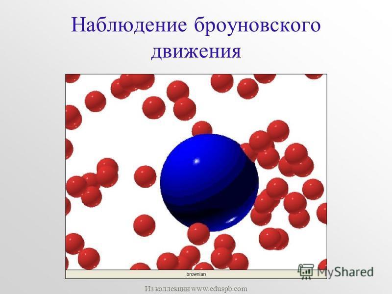 Наблюдение броуновского движения Из коллекции www.eduspb.com