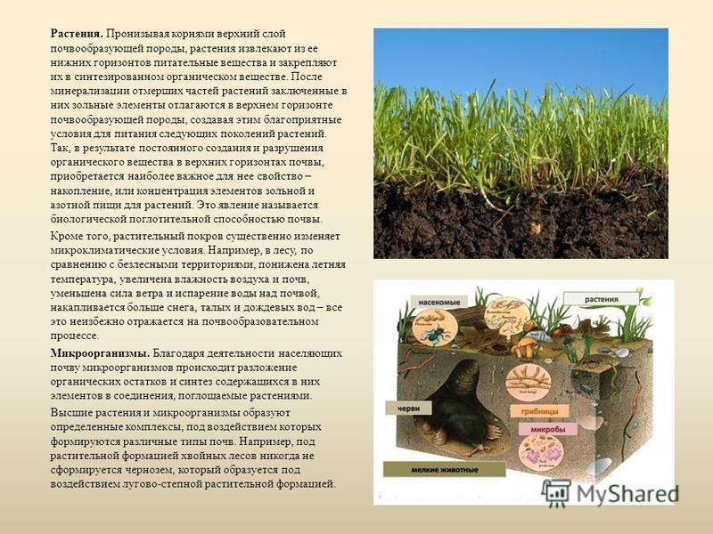 Растения. Пронизывая корнями верхний слой почвообразующей породы, растения извлекают из ее нижних горизонтов питательные вещества и закрепляют их в синтезированном органическом веществе. После минерализации отмерших частей растений заключенные в них