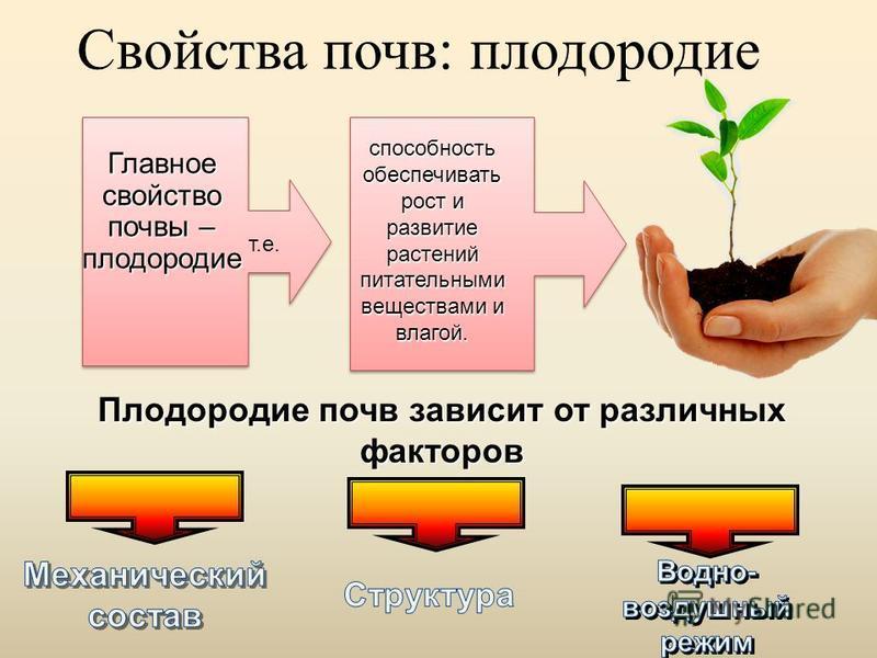 Свойства почв: плодородие Плодородие почв зависит от различных факторов Главное свойство почвы – плодородие т.е. способность обеспечивать рост и развитие растений питательными веществами и влагой.