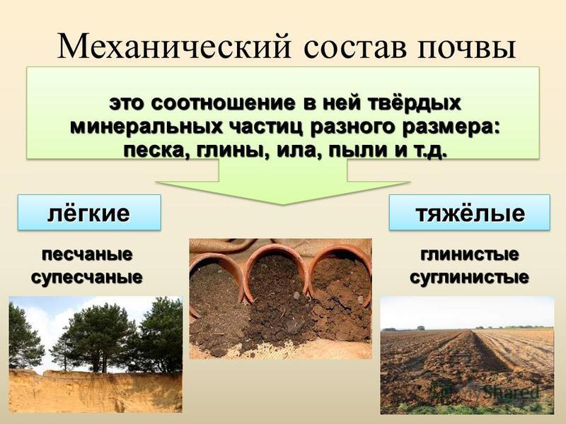 Механический состав почвы это соотношение в ней твёрдых минеральных частиц разного размера: песка, глины, ила, пыли и т.д. лёгкие тяжёлые глинистые суглинистые песчаные супесчаные