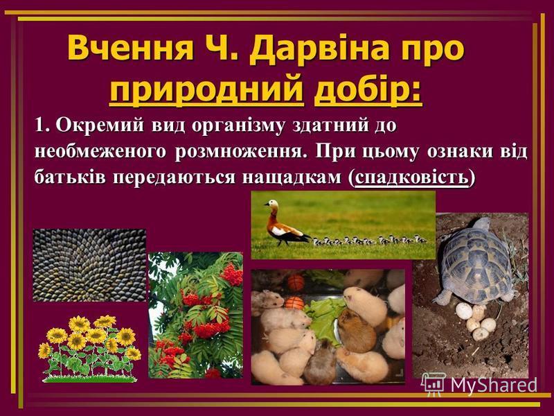 Вчення Ч. Дарвіна про природний добір: 1. Окремий вид організму здатний до необмеженого розмноження. При цьому ознаки від батьків передаються нащадкам (спадковість)