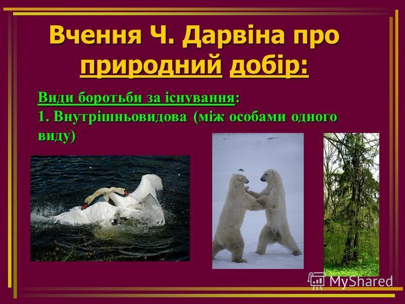 Вчення Ч. Дарвіна про природний добір: Види боротьби за існування: 1. Внутрішньовидова (між особами одного виду)