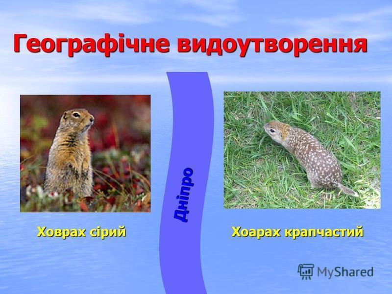 Географічне видоутворення Дніпро Хоарах крапчастий Ховрах сірий