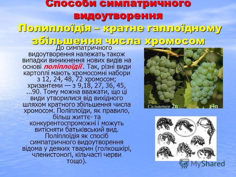 Способи симпатричного видоутворення Полиплоїдія – кратне гаплоїдному збільшення числа хромосом До симпатричного видоутворення належать також випадки виникнення нових видів на основі поліплоїдії. Так, різні види картоплі мають хромосомні набори з 12,