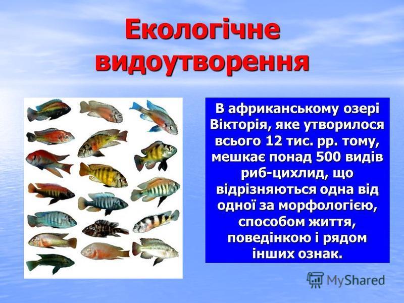 Екологічне видоутворення В африканському озері Вікторія, яке утворилося всього 12 тис. рр. тому, мешкає понад 500 видів риб-цихлид, що відрізняються одна від одної за морфологією, способом життя, поведінкою і рядом інших ознак.