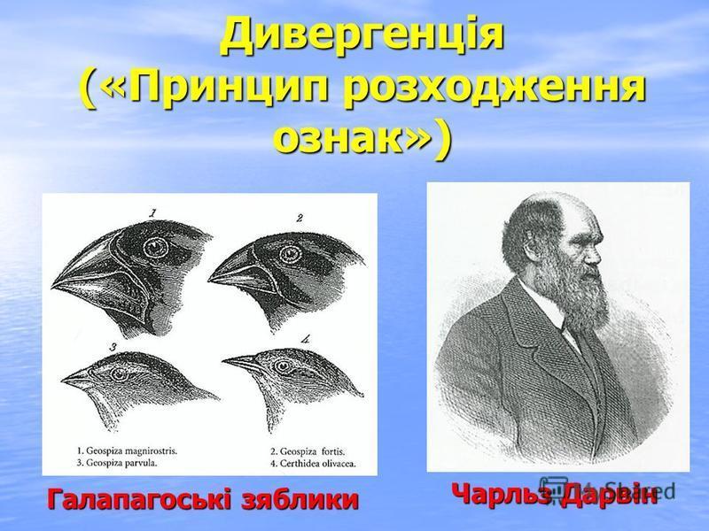 Дивергенція («Принцип розходження ознак») Чарльз Дарвін Галапагоські зяблики