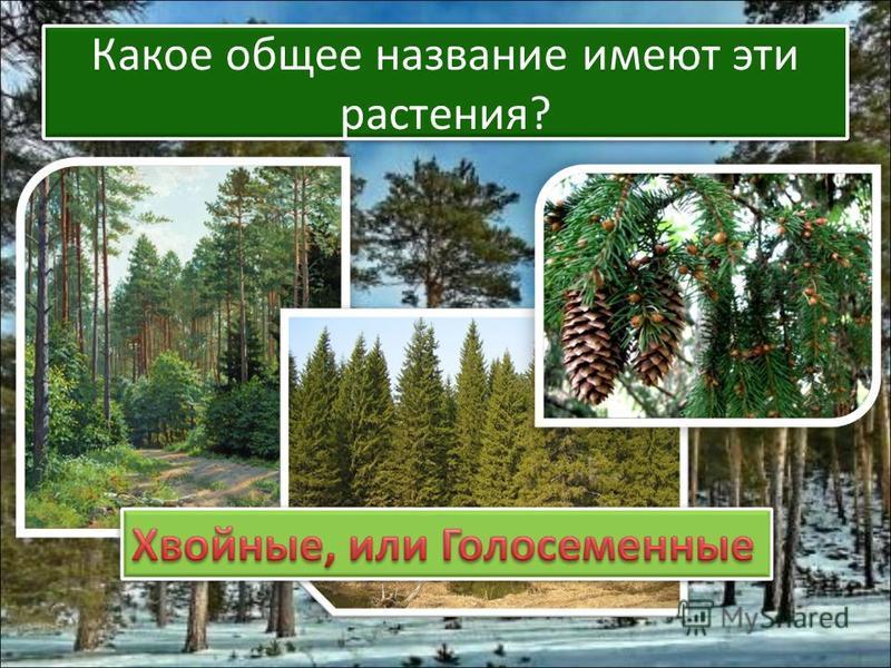 Какое общее название имеют эти растения?