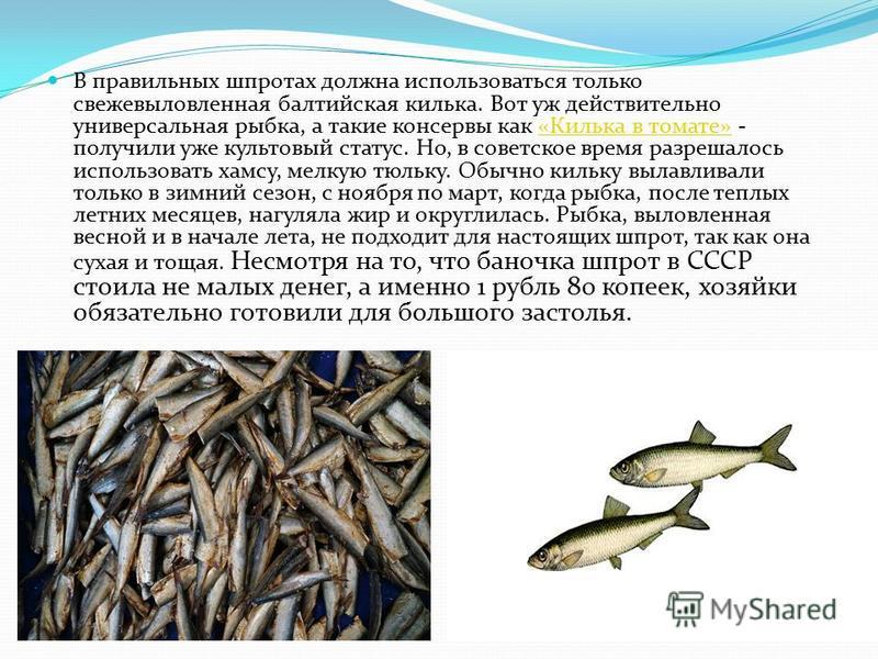 В правильных шпротах должна использоваться только свежевыловленная балтийская килька. Вот уж действительно универсальная рыбка, а такие консервы как «Килька в томате» - получили уже культовый статус. Но, в советское время разрешалось использовать хам