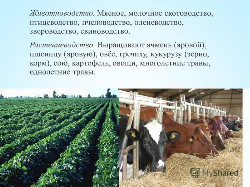 Животноводство. Мясное, молочное скотоводство, птицеводство, пчеловодство, оленеводство, звероводство, свиноводство. Растениеводство. Выращивают ячмень (яровой), пшеницу (яровую), овёс, гречиху, кукурузу (зерно, корм), сою, картофель, овощи, многолет