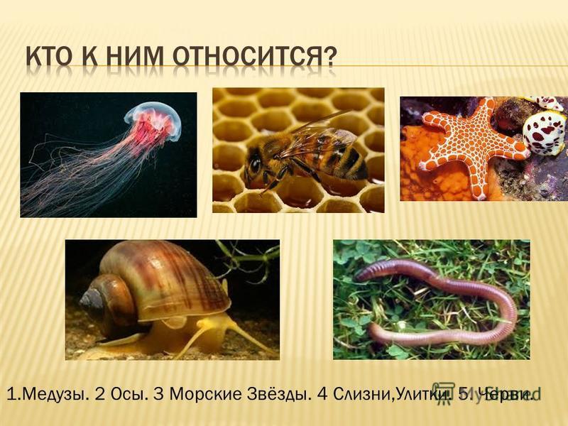 1.Медузы. 2 Осы. 3 Морские Звёзды. 4 Слизни,Улитки. 5. Черви.