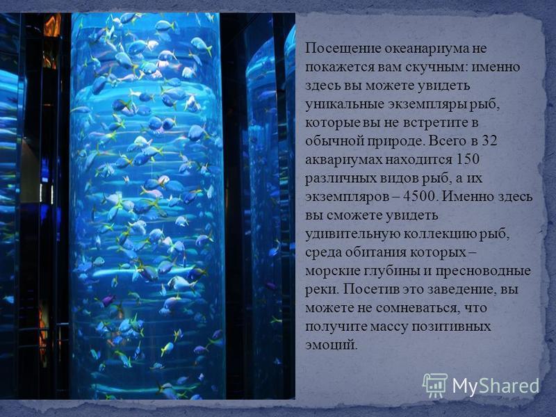 Посещение океанариума не покажется вам скучным : именно здесь вы можете увидеть уникальные экземпляры рыб, которые вы не встретите в обычной природе. Всего в 32 аквариумах находится 150 различных видов рыб, а их экземпляров – 4500. Именно здесь вы см