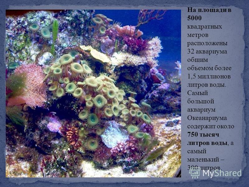 На площади в 5000 квадратных метров расположены 32 аквариума общим объемом более 1,5 миллионов литров воды. Самый большой аквариум Океанариума содержит около 750 тысяч литров воды, а самый маленький – 300 литров.