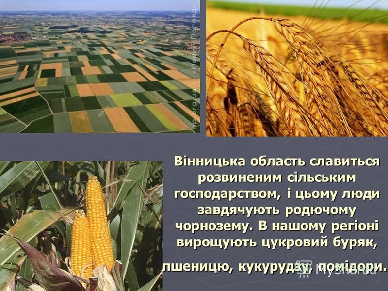 Вінницька область славиться розвиненим сільським господарством, і цьому люди завдячують родючому чорнозему. В нашому регіоні вирощують цукровий буряк, пшеницю, кукурудзу, помідори. Вінницька область славиться розвиненим сільським господарством, і цьо