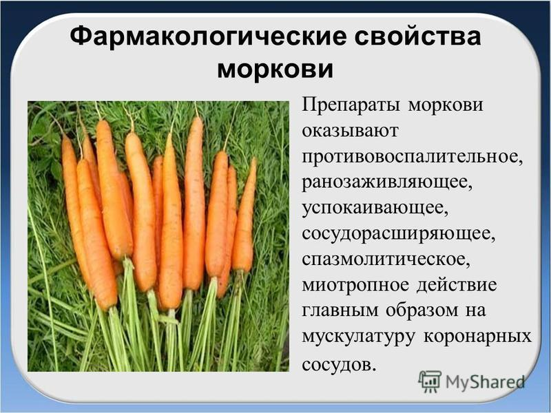 Фармакологические свойства моркови Препараты моркови оказывают противовоспалительное, ранозаживляющее, успокаивающее, сосудорасширяющее, спазмолитическое, миотропное действие главным образом на мускулатуру коронарных сосудов.