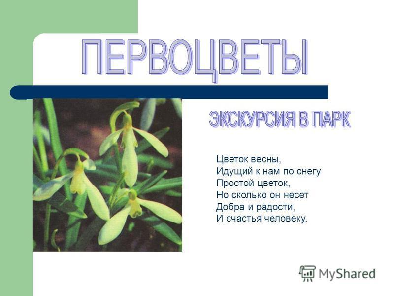 Цветок весны, Идущий к нам по снегу Простой цветок, Но сколько он несет Добра и радости, И счастья человеку.