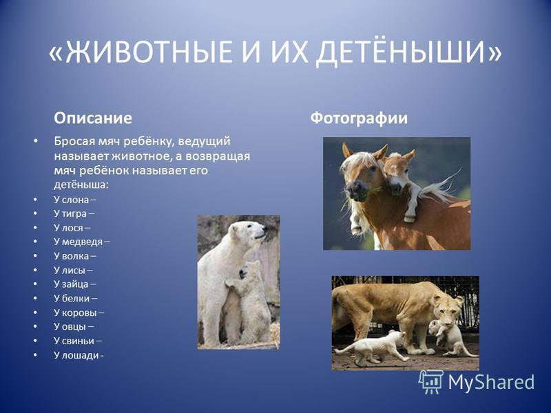 «ЖИВОТНЫЕ И ИХ ДЕТЁНЫШИ» Описание Бросая мяч ребёнку, ведущий называет животное, а возвращая мяч ребёнок называет его детёныша: У слона – У тигра – У лося – У медведя – У волка – У лисы – У зайца – У белки – У коровы – У овцы – У свиньи – У лошади -