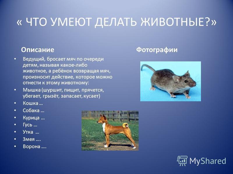 « ЧТО УМЕЮТ ДЕЛАТЬ ЖИВОТНЫЕ?» Описание Ведущий, бросает мяч по очереди детям, называя какое-либо животное, а ребёнок возвращая мяч, произносит действие, которое можно отнести к этому животному: Мышка (шуршит, пищит, прячется, убегает, грызёт, запасае