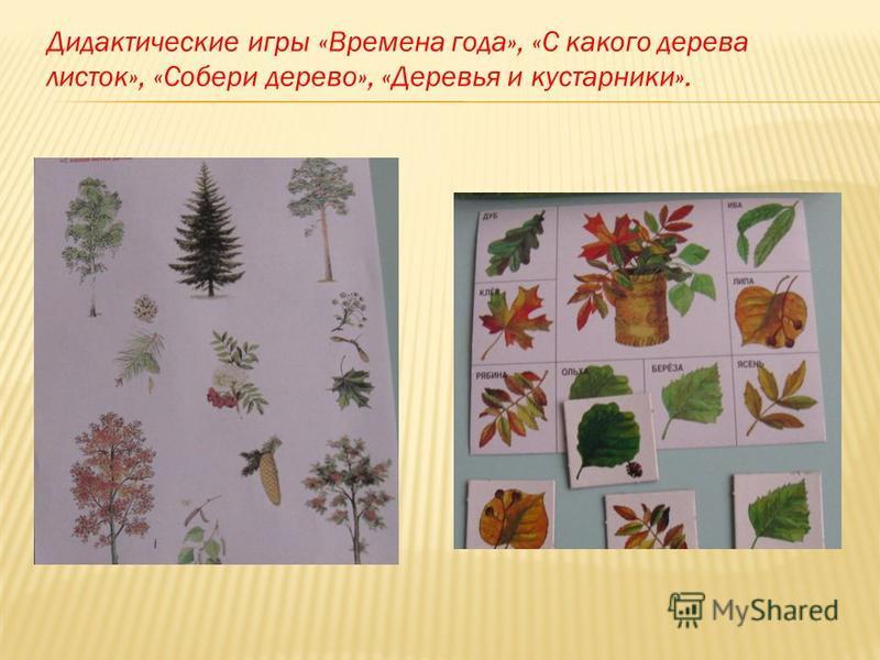 Дидактические игры «Времена года», «С какого дерева листок», «Собери дерево», «Деревья и кустарники».