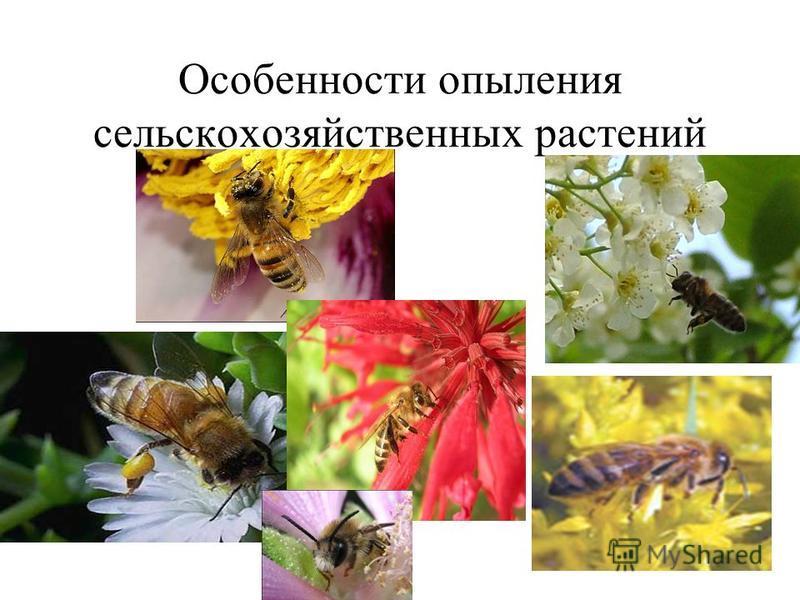 Особенности опыления сельскохозяйственных растений