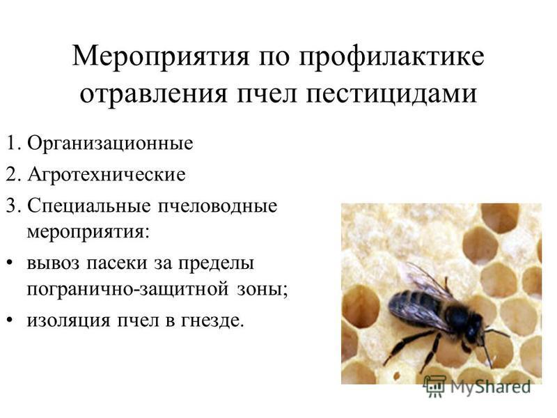 Мероприятия по профилактике отравления пчел пестицидами 1. Организационные 2. Агротехнические 3. Специальные пчеловодные мероприятия: вывоз пасеки за пределы погранично-защитной зоны; изоляция пчел в гнезде.