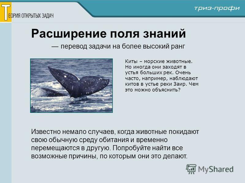 Расширение поля знаний перевод задачи на более высокий ранг Киты – морские животные. Но иногда они заходят в устья больших рек. Очень часто, например, наблюдают китов в устье реки Заир. Чем это можно объяснить? Известно немало случаев, когда животные