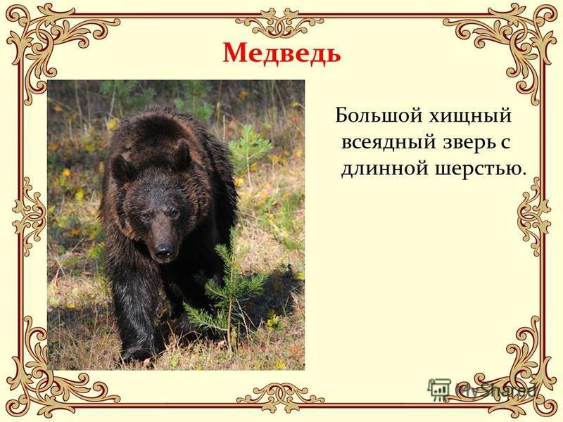Медведь Большой хищный всеядный зверь с длинной шерстью.