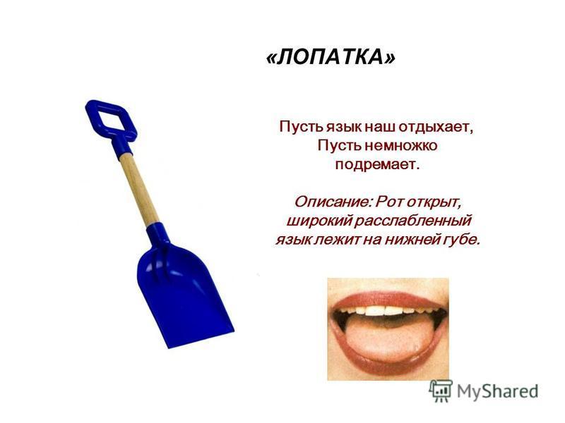 «ЛОПАТКА» Пусть язык наш отдыхает, Пусть немножко подремает. Описание: Рот открыт, широкий расслабленный язык лежит на нижней губе.